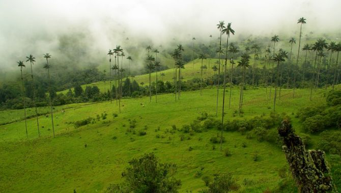 Colombie paysage