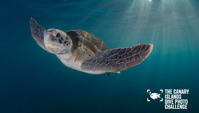 Concours photo Canaries tortue