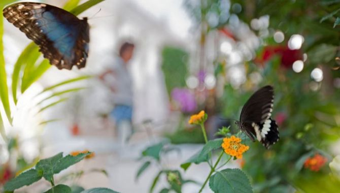 Belgique papillon suite
