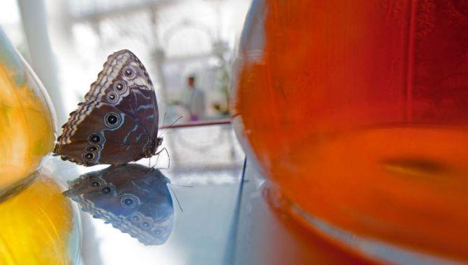 Belgique papillon