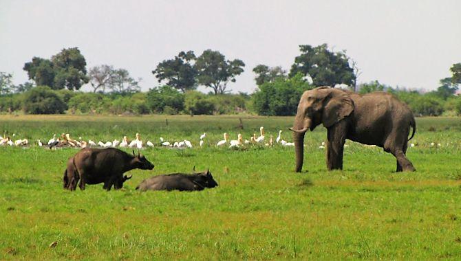 Essentiel Botswana elephants