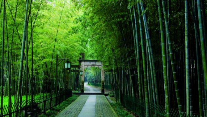 Hangzou bambous