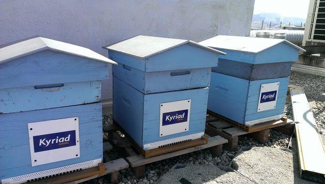 Marseille Kyriad ruches