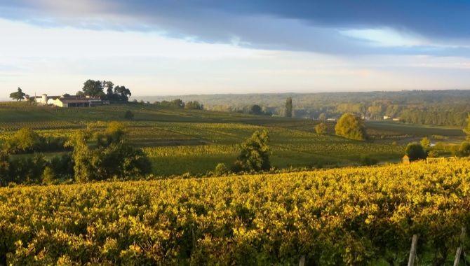 Route des Vins paysage