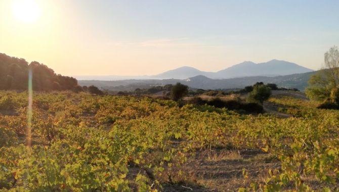 Corse vignoble coucher de soleil