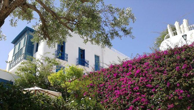Tunis Sidi Bou Said fleuri