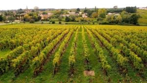 Bordelais vignes