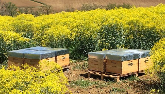 Terre de pastel plantes et ruches