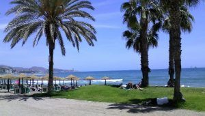 Espagne palmiers